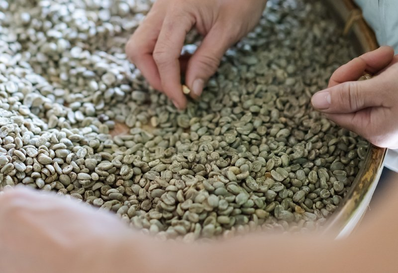 Skipping The Roast The Top Benefits Of Unroasted Coffee Beans