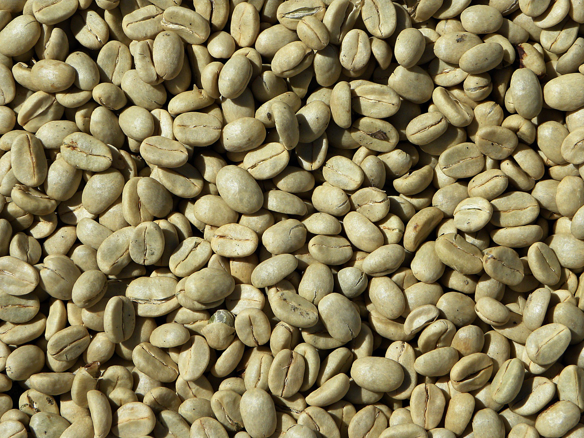 Common Questions Asked About Unroasted Green Coffee Beans